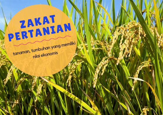 zakat-mal-harta-pertanian
