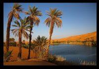 pohon-kurma-dan-oase-di-arab