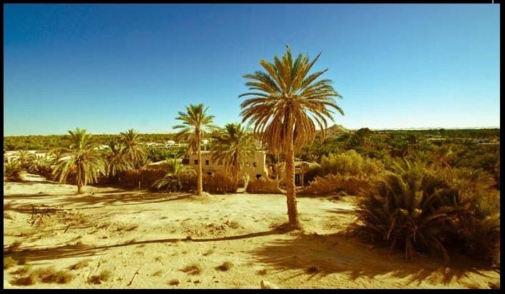 pohon-kurma-di-gurun-padang-pasir-arab