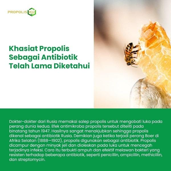 khasiat-propolisku-antibiotik
